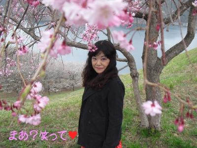 2013_3_29_Cherry_blossom04.jpg