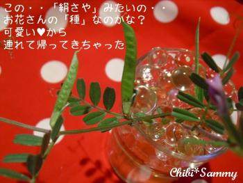 2013_4_26flower04.jpg