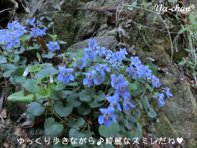 2013_4_5_happy_smile06.jpg