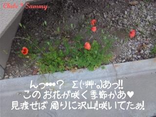 2013_5_14_flower01.jpg