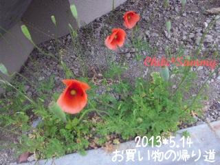 2013_5_14_flower02.jpg