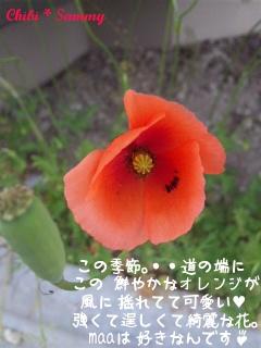 2013_5_14_flower03.jpg