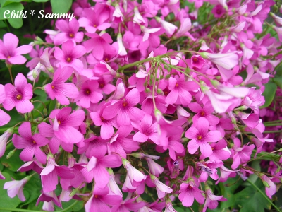 2013_5_29_Flowers01.jpg