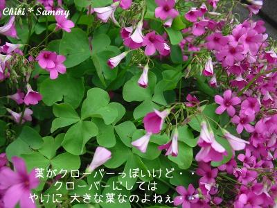 2013_5_29_Flowers02.jpg