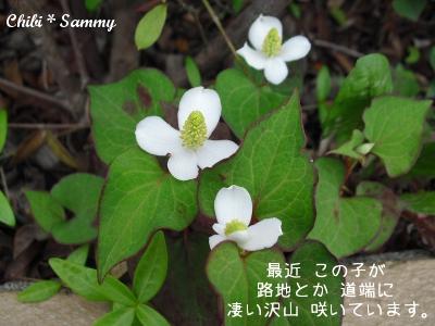 2013_5_29_Flowers03.jpg