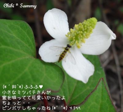 2013_5_29_Flowers04.jpg