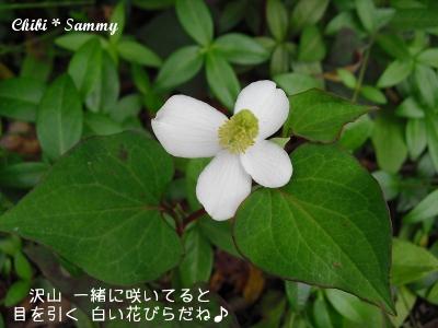 2013_5_29_Flowers05.jpg