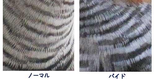 240421-3.jpg
