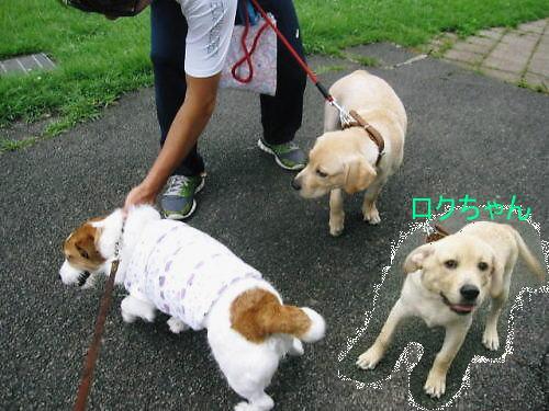2011長岡公園634