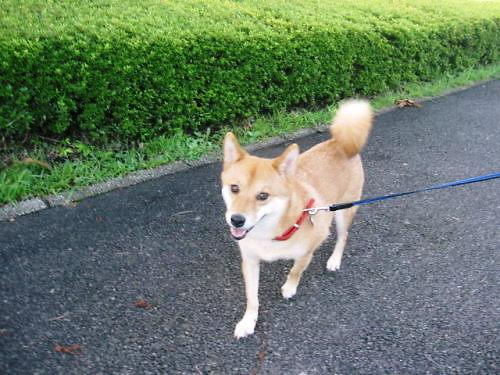2011長岡公園647