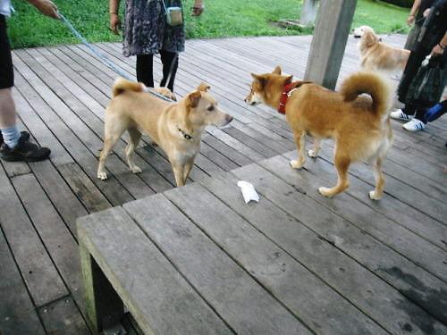 2011長岡公園649