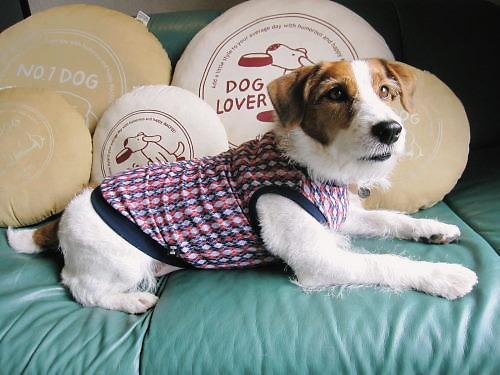 2011犬服008
