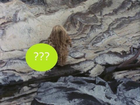 ウーが岩場でつまずいたのは?