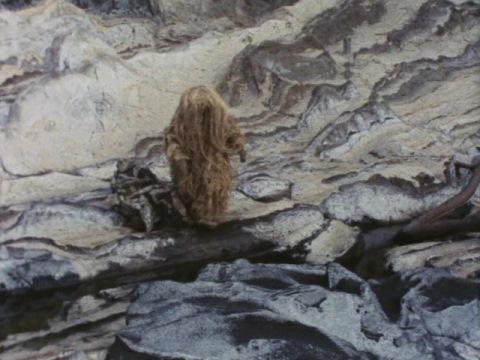 ウーが岩場でつまずいたのは・・・シーボーズ
