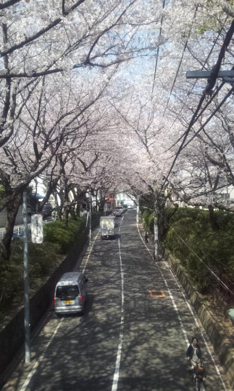桜坂2012の2
