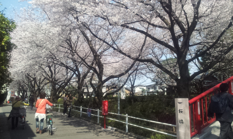 桜坂2012の1