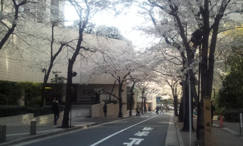 六本木桜坂