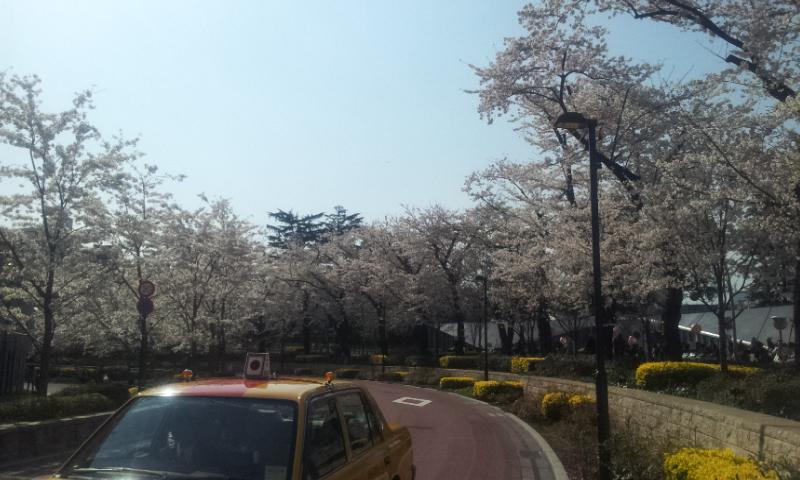 ミッドタウン桜1