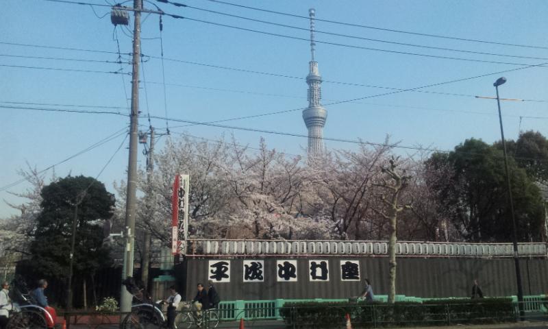 墨田公園桜と中村座