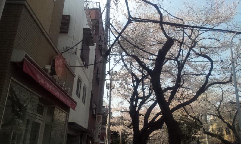 稲村修三桜
