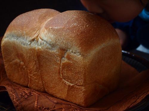 いちご食パン1の1