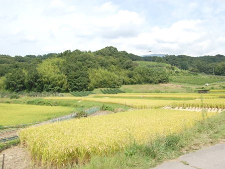 ueda20140910_001.jpg