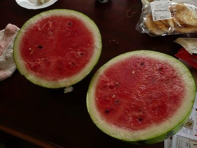 交配34日後のボカシ肥料無しの直播き西瓜を切ってみた