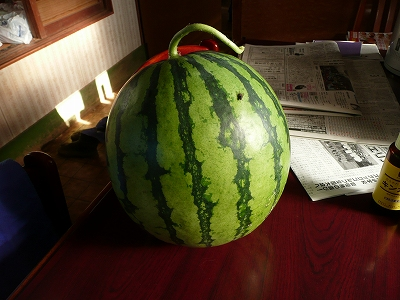 交配34日後のボカシ肥料有りのポット蒔き西瓜