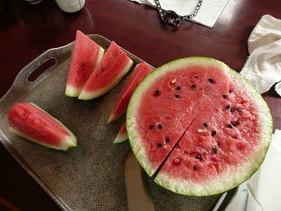交配34日後のボカシ肥料有りのポット蒔き西瓜を切ってみた