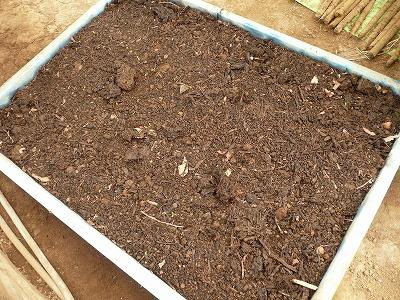 種蒔き5日後のアトン