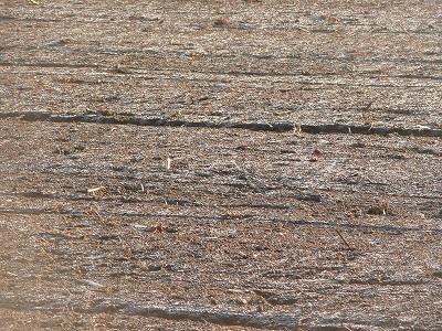 霜が降りた畑・ズーム