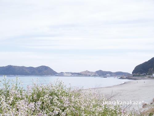 龍宮の磯付近の砂浜