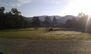 奈良公園_convert_20120221112858