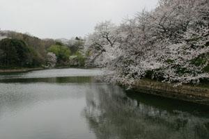 20130323-花見