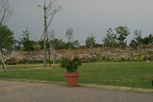 20130520-花畑
