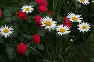 20130520-小路の花3