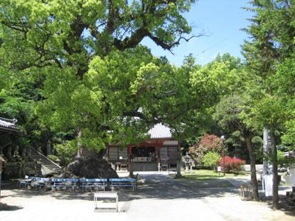 観音寺03
