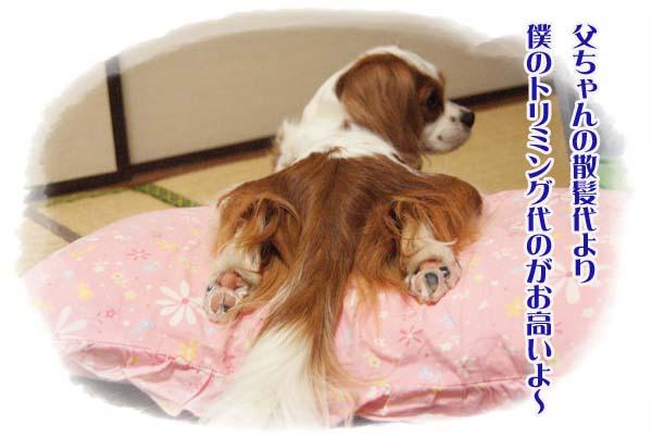 20110812_1.jpg