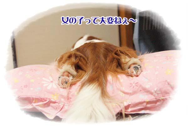 20110812_2.jpg