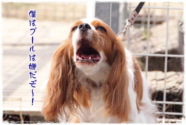 20110828_74.jpg