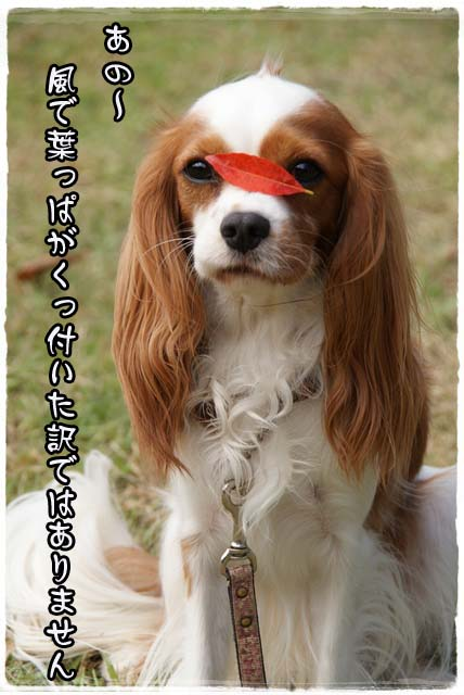 20111004_47.jpg