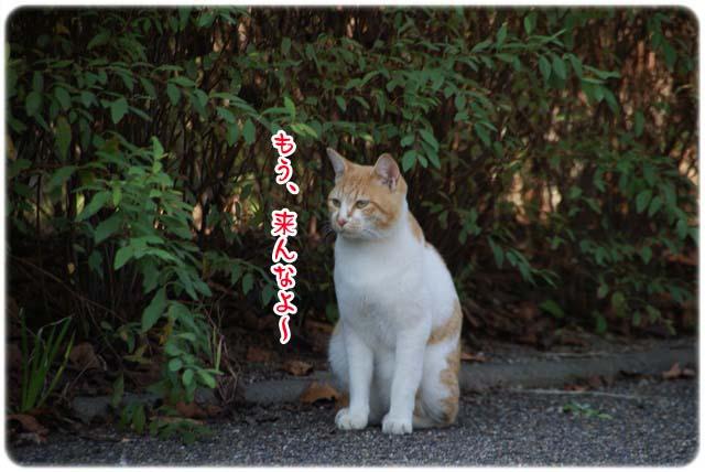 20111020_105.jpg