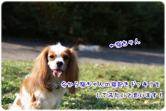 20111020_19.jpg
