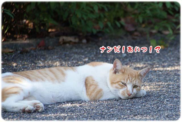 20111020_22.jpg