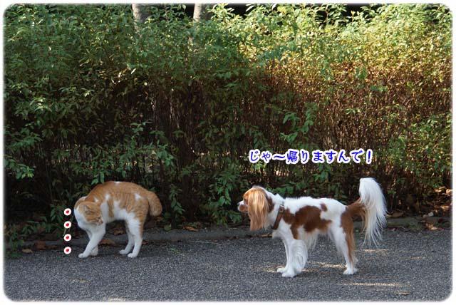 20111020_99.jpg
