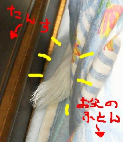 NEC_1755.jpg