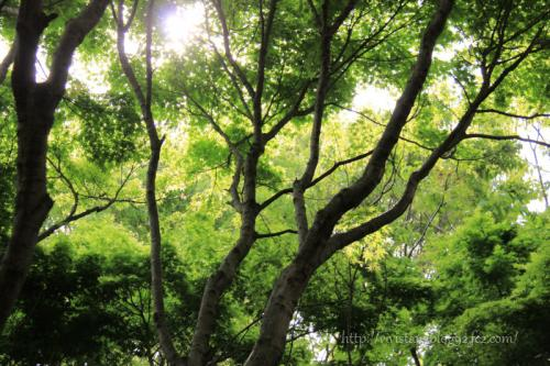 レオの森01