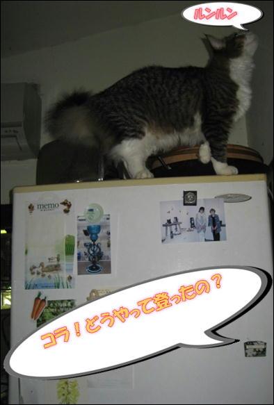 冷蔵庫 007