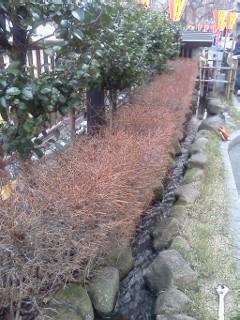 megurogawayoko-suiro2.jpg