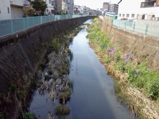 nogawashuuhenn-yagamigawa.jpg